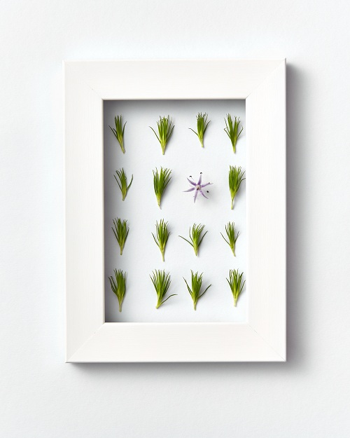 acheter le tableau végétal