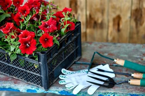 les différents types d'accessoires pour le jardinage